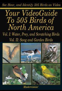 Poster-Bird VG 505