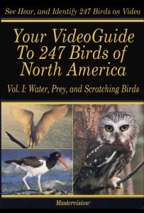 Poster-Bird VG I