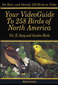 Poster-Bird VG II